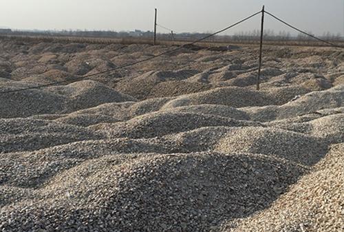 儲存的貝殼原料
